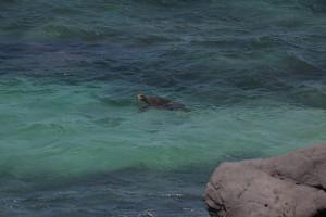 Première journée de Coaching à Maui.